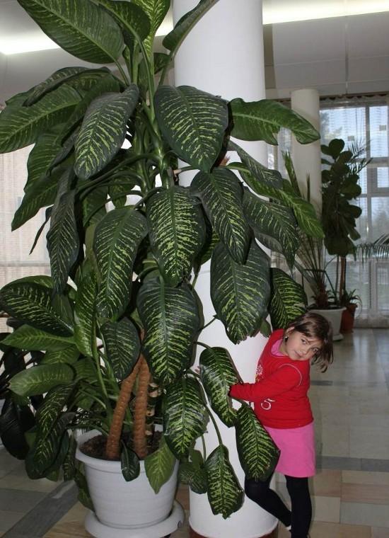 Самые популярные комнатные растения фото