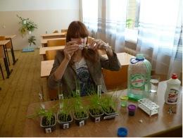 Оценка токсичности средств для мытья посуды с помощью биотестеров
