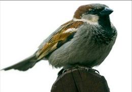 Особенности подкормки птиц в зимний период
