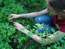 Оценка качества окружающей среды города Котельники методом биоиндикации почвы по растениям