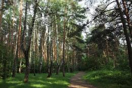 Проблемы загрязнения окружающей среды на территории Кузьминского лесопарка