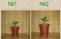 Воздействие музыки на растения и другие живые организмы