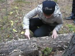 Древоразрушающие грибы сосны обыкновенной на территории Танаевского леса